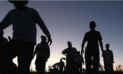 migrantes-en-pastizal (1)