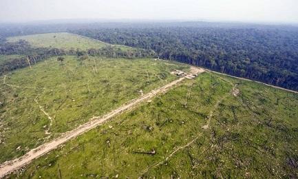 Vista aérea de la Selva de Jamanxim, en el Estado de Pará (Antônio Scorza/AFP)
