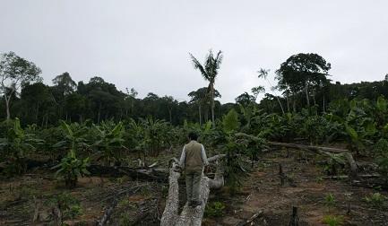 Demetrio Pacheco, ambientalista peruano que recibió reiteradas amenazas por defender su territorio de la tala ilegal de bosques (Foto Jack Lo vía Mongabay Latam)