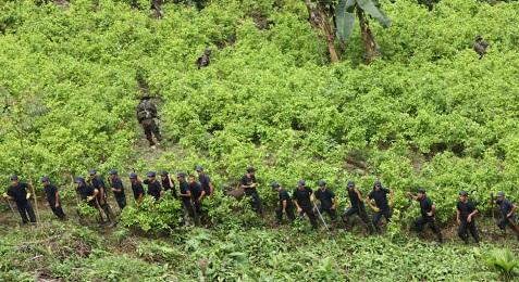 PLANTACIONES FUERA DE CONTROL. En Colombia la superficie cultivada de coca se ha cuadruplicado en los últimos tres años. El gobierno lanza un nuevo plan de erradicación