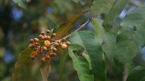 """LA AMAZONÍA PUEDE SALVAR VIDAS. Investigadores observan que una planta mata células cancerígenas en el hígado. El estudio publicado en la revista científica """"Heliyon"""""""